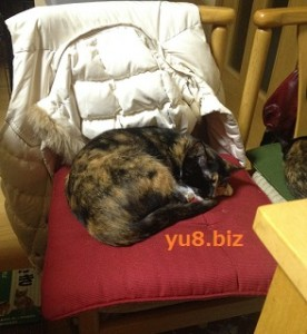 猫 ストレス解消法
